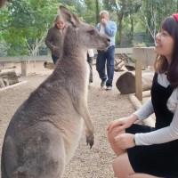 Úc - khởi hành tết âm 2020